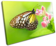 Butterfly Animals - 13-1004(00B)-SG32-LO